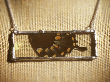 Butterfly wing encased in glass necklace